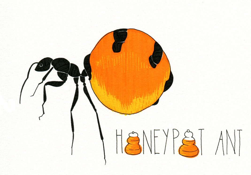 honeypot ant by deviant art user 365animals