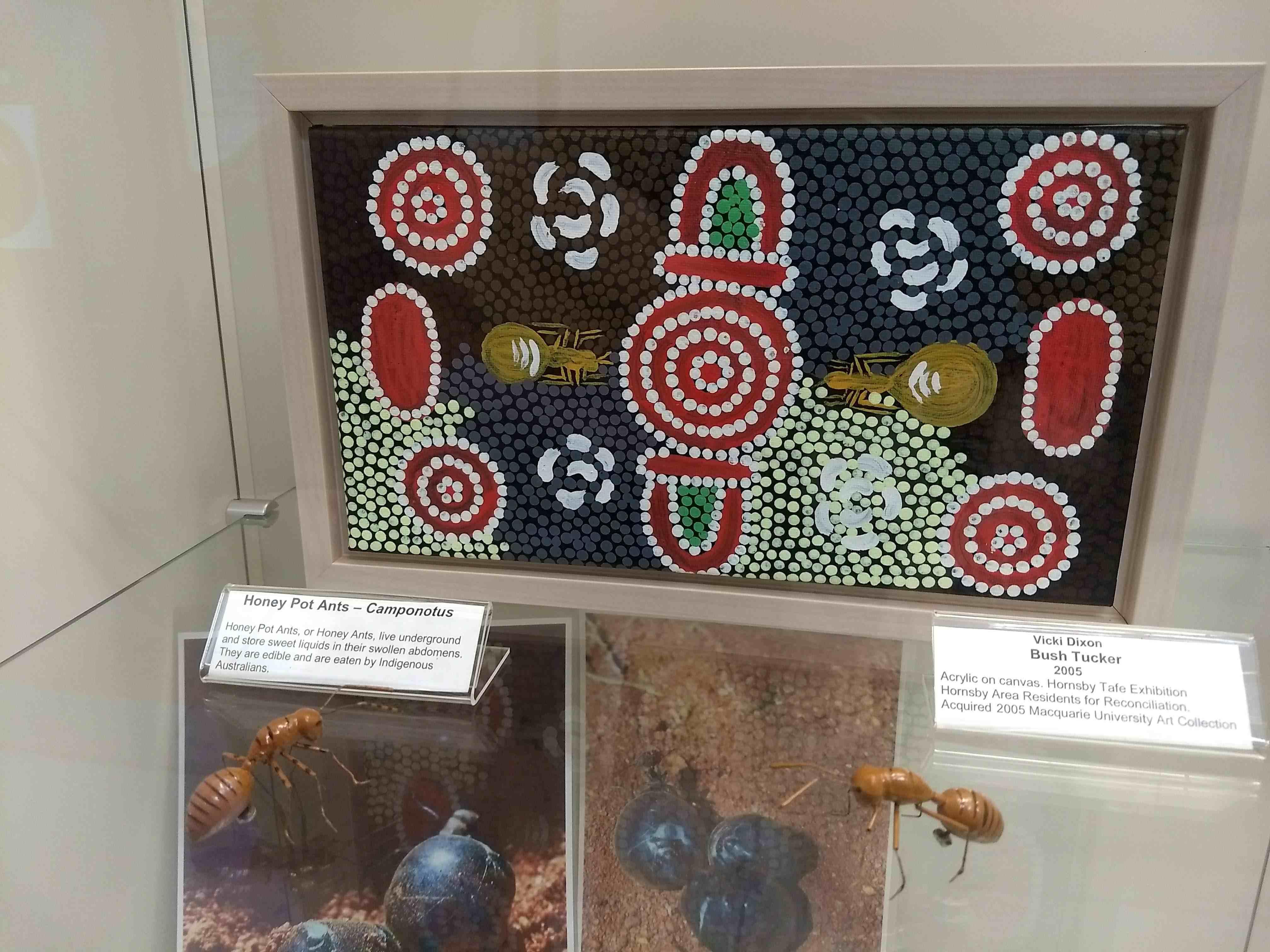 honeypot ant university art